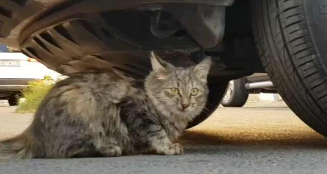 Kätzchen wurde unter dem Auto gefunden. Quelle: Screenshot Youtube