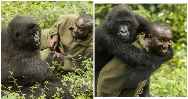 Gorillas und Andre. Quelle: Screenshot Youtube