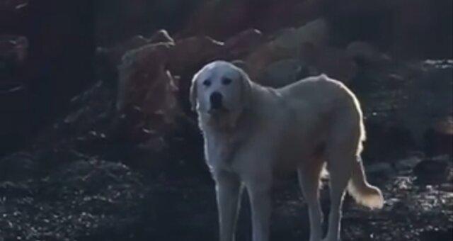 Hund Madison. Quelle: Screenshot Youtube