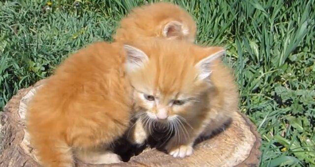Rothaarige Kätzchen. Quelle: Screenshot Youtube