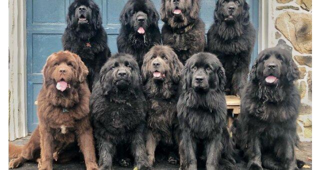 9 Hunde von Mackenzie Macace. Quelle: Screenshot Youtube