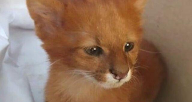 Ungewöhnliches Kätzchen. Quelle: Screenshot Youtube