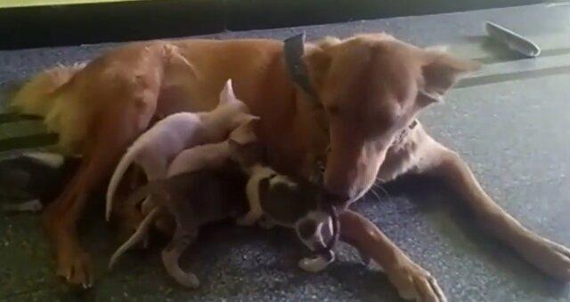 Hündin Champa und Kätzchen. Quelle: Screenshot Youtube