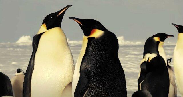 Pinguine. Quelle: Screenshot YouTube