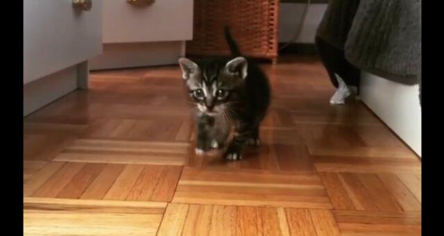 Kätzchen Koda. Quelle: Screenshot Youtube