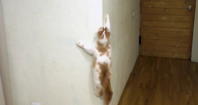 Kater hat die Wand hochgeklettert. Quelle: Screenshot Youtube