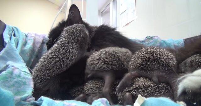 Katze Mia und ihre Adoptivkinder. Quelle: Screenshot Youtube