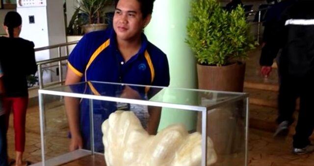 Die größte Perle der Geschichte. Quelle: Screenshot Youtube