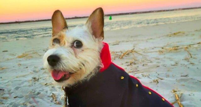 Hund Frankie. Quelle: Screenshot Youtube