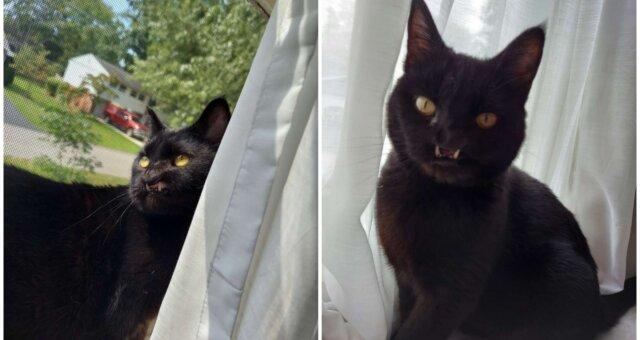Katze Onyx. Quelle: Screenshot Youtube