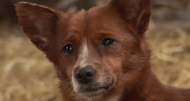 Hund Ruuki. Quelle: Screenshot Youtube