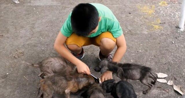 Ken füttert streunende Hunde. Quelle: Screenshot Youtube