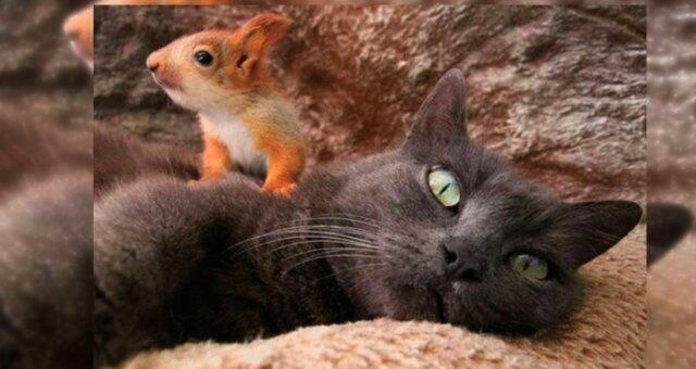 Katze und Eichhörnchen. Quelle: leprechaun.land