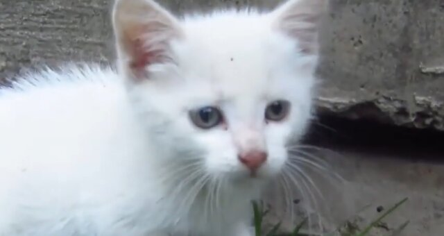Weißes Kätzchen. Quelle: Screenshot Youtube