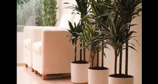 Topfpflanzen für die Wohnung. Quelle: Screenshot Youtube