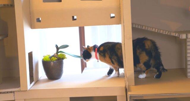 Familie hat ein separates Haus für Katzen gebaut. Quelle: Screenshot Youtube
