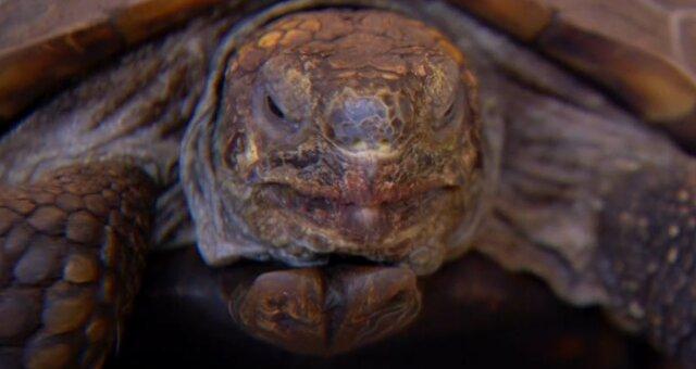 Schildkröte George. Quelle: Screenshot Youtube