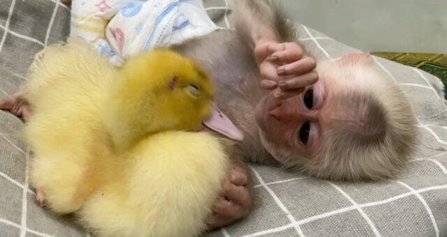 Ein bezauberndes Paar von Babys. Quelle: Screenshot YouTube