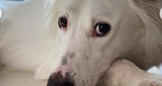Hund Snowy. Quelle: Screenshot Youtube