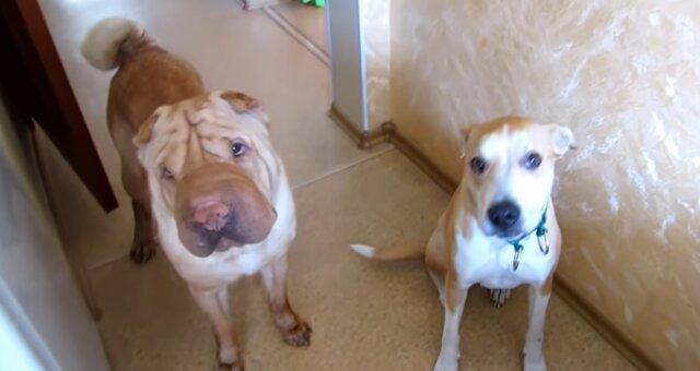 Zwei Hunde. Quelle: Screenshot Youtube