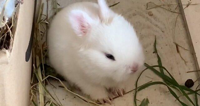 Kaninchen. Quelle: Screenshot Youtube