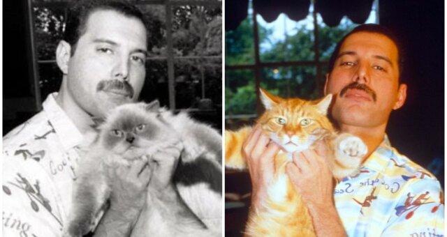 Freddie Mercury und seine Haustiere. Quelle: Screenshot Youtube