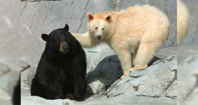 Bären. Quelle: petpop.cc