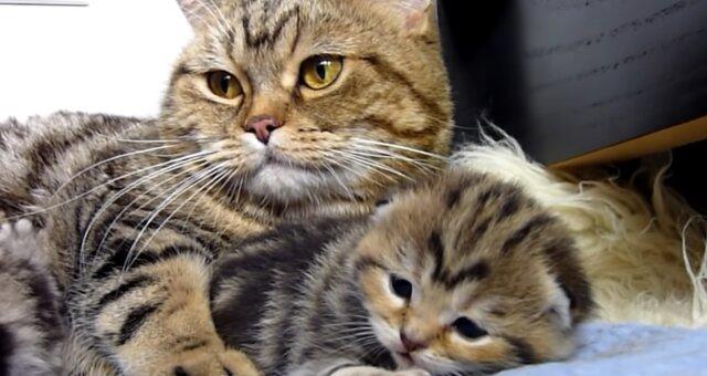 Katzenmama und ihr Kätzchen. Quelle: Screenshot Youtube