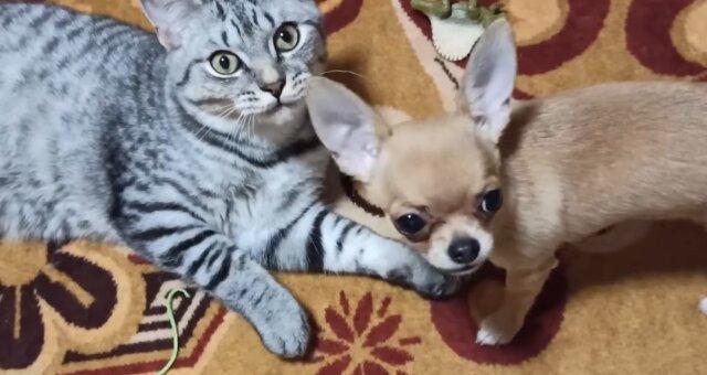 Katze und Hündin wurden beste Freunde. Quelle: Screenshot Youtube