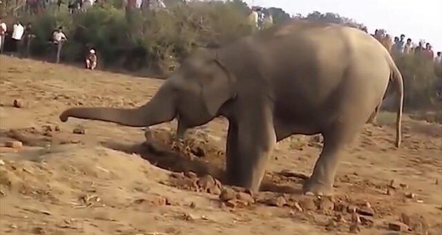 Elefantenweibchen grub elf Stunden lang. Quelle: Screenshot Youtube