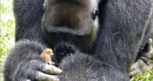Bobo und sein kleiner Freund namens Baby. Quelle: Screenshot Youtube