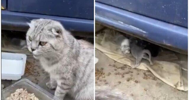 Katzenmama und ihre Babys. Quelle: Screenshot Youtube