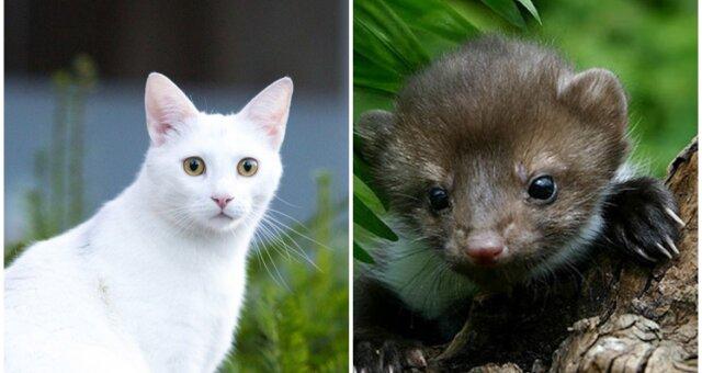 """Katze """"adoptierte"""" wilde Marderbabys. Quelle: Screenshot Youtube"""