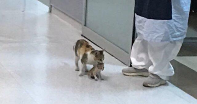 Katze brachte ihre Kätzchen in eine Klinik. Quelle: Screenshot Youtube