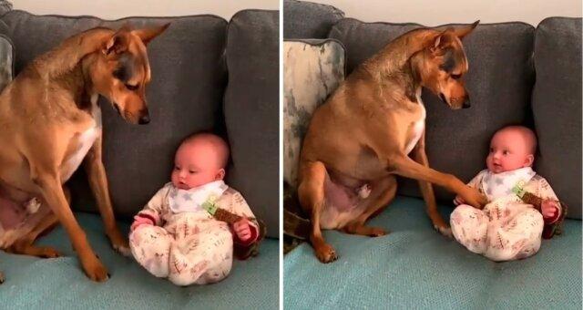 Hund und Baby. Quelle: Screenshot Instagram