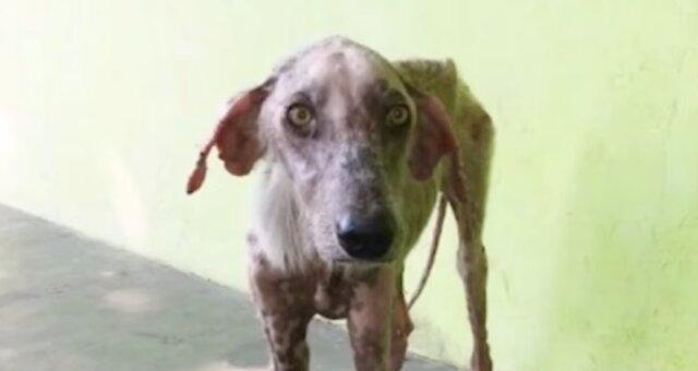 Abgemagerter Hund. Quelle: Screenshot Youtube