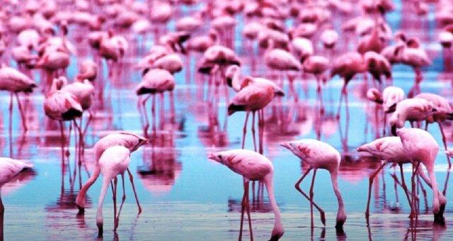 Flamingos. Quelle: Screenshot YouTube