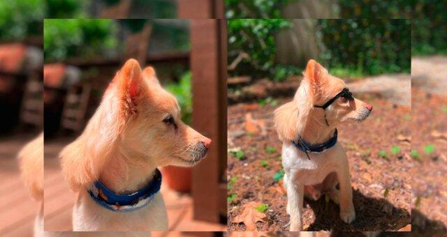 Hund. Quelle: storytrender.com