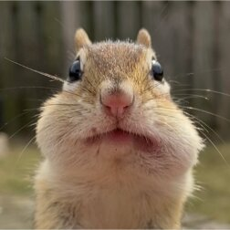 Streifenhörnchen. Quelle: Screenshot Youtube