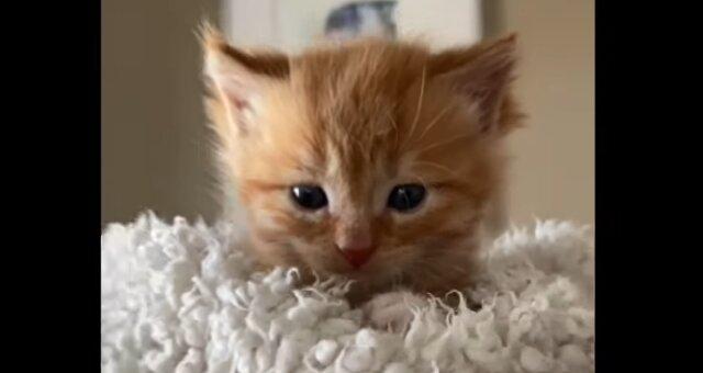 Kätzchen Rob. Quelle: Screenshot Youtube