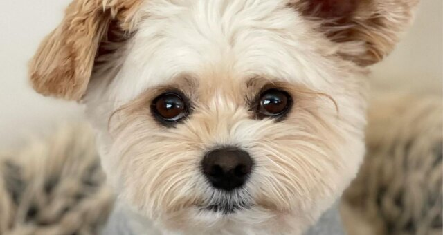 Hund Popeye. Quelle: Screenshot Youtube