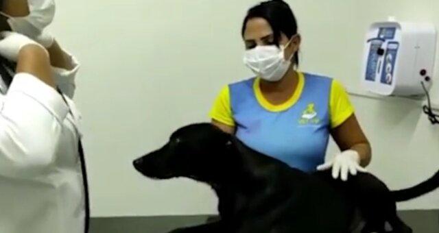 Hund in der Klinik. Quelle: Screenshot Youtube