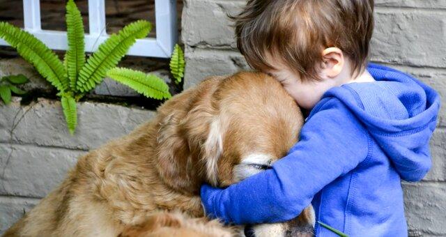 Hund rettete das Leben einem 3-jährigen Jungen. Quelle: Screenshot Youtube