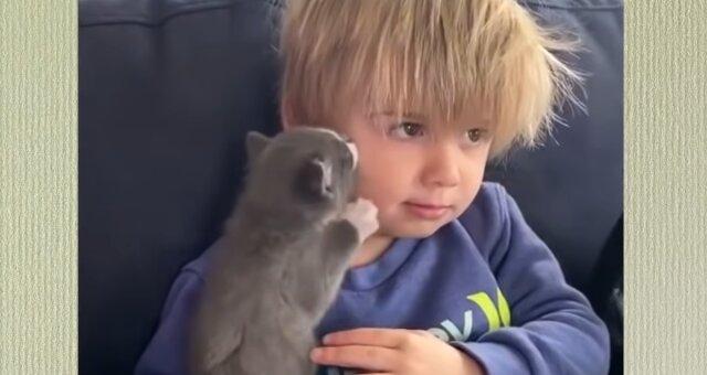 Ash und Kätzchen. Quelle: Screenshot Youtube