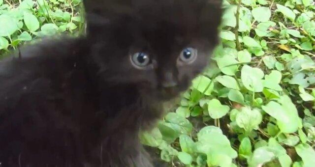 Schwarzes Kätzchen. Quelle: Screenshot Youtube