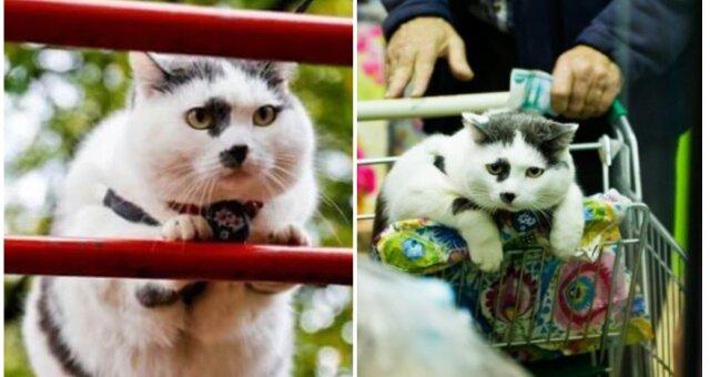 Seltene Katze. Quelle: Screenshot Youtube