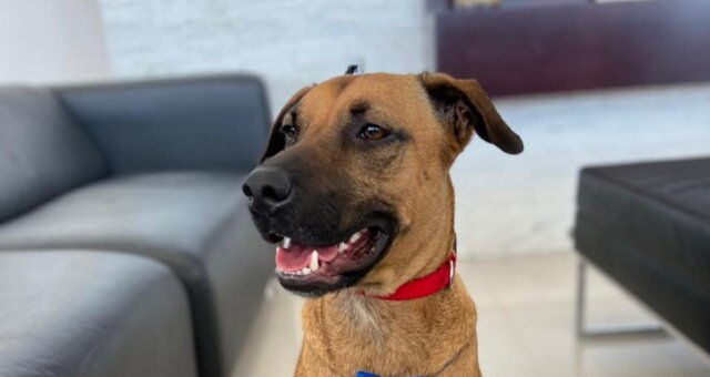 Hund namens Tucson. Quelle: Instagram