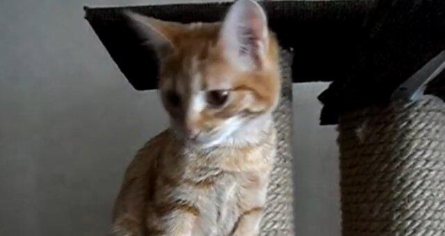 Verwaistes Kätzchen. Quelle: Screenshot Youtube