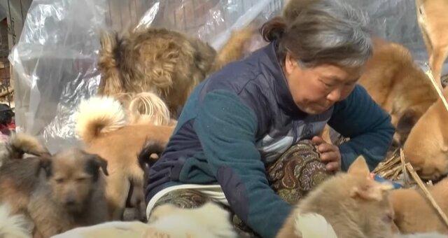 Joon Myung-Sook füttert die Welpen. Quelle: Screenshot Youtube