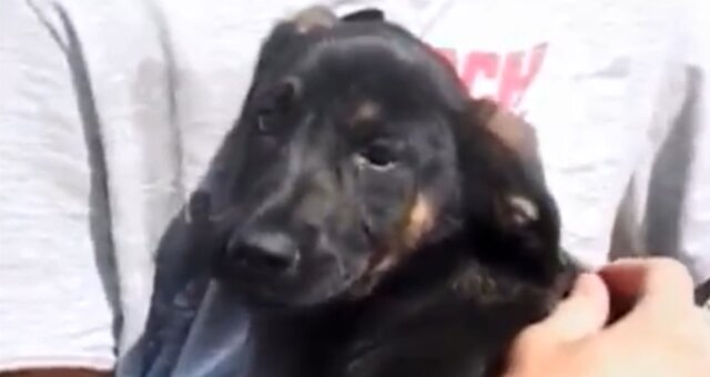 Geretteter Hund. Quelle: Screenshot Youtube